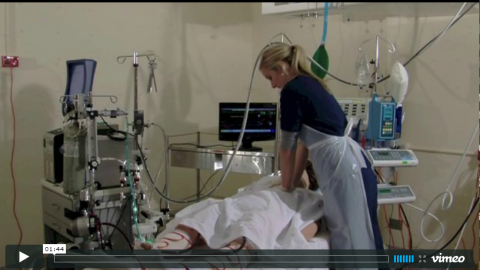 ECMO Cardiac Arrest
