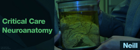 Critical Care Neuroanatomy by Andy Neill